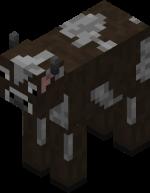 Корова: Взрослая